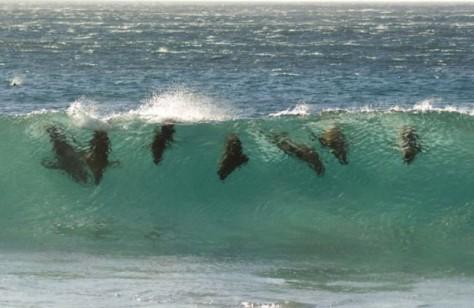 Seals in the pipeline.jpg