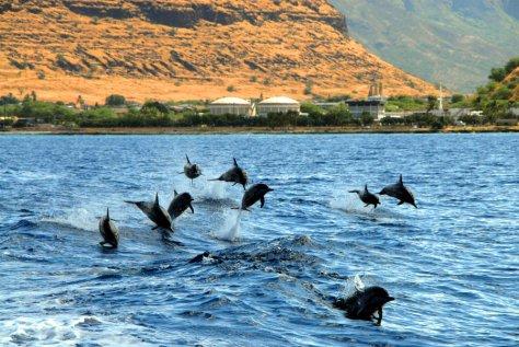 surfing dolphin freaks 2016.jpg